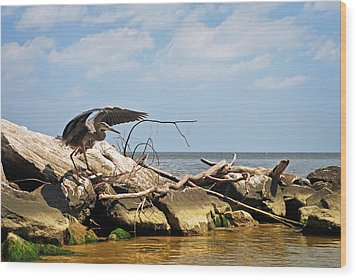 Great Blue Heron Wings Outstretched Wood Print by Rebecca Sherman