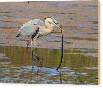 Wood Print featuring the photograph Great Blue Heron Wrestles A Snake by Barbara Bowen