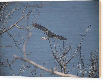 Wood Print featuring the photograph Great Blue In Flight by David Bearden