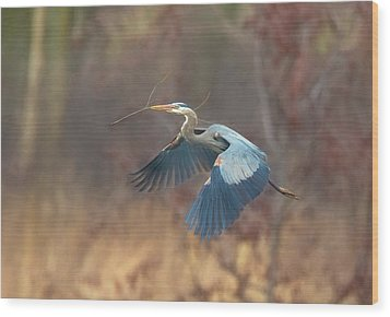 Great Blue Wood Print by Kelly Marquardt