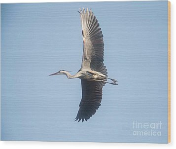 Wood Print featuring the photograph Great Blue On Final by David Bearden