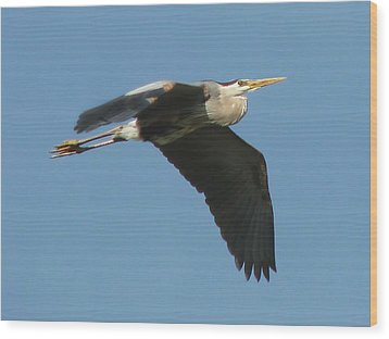 Wood Print featuring the photograph Great Blue by Peg Urban