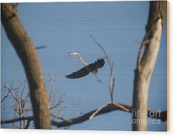 Wood Print featuring the photograph Great Blues Nesting by David Bearden