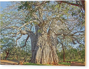 Great Boabab Tree Wood Print by Taschja Hattingh