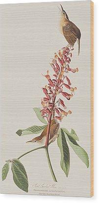 Great Carolina Wren Wood Print by John James Audubon