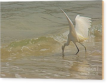 Wood Print featuring the photograph Great Egret 2 by Nicola Fiscarelli