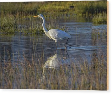 Great Egret, Ardea Alba, In A Pond Wood Print by Elenarts - Elena Duvernay photo