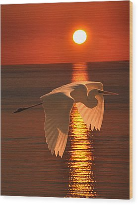 Great Egret At Sunset Wood Print