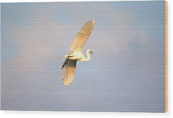 Great Egret Bathed In Golden Sunlight Wood Print