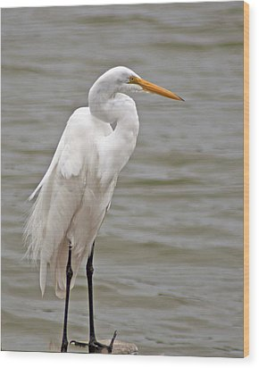 Great Egret Wood Print by Bill Barber