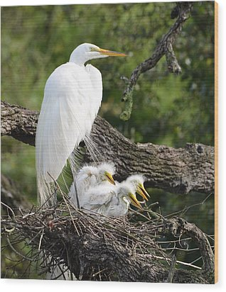 Great Egret Family  Wood Print by Richard Bryce and Family