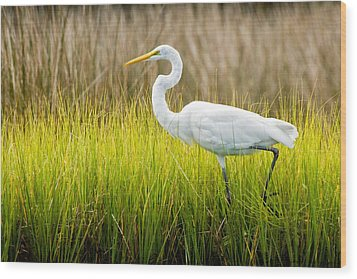 Wood Print featuring the photograph Great Egret In Cedar Point Marsh by Bob Decker