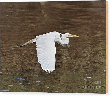 Great Egret In Flight Wood Print by Al Powell Photography USA