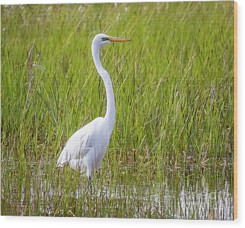 Wood Print featuring the photograph Great Egret In The Spring  by Ricky L Jones