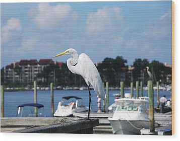 Wood Print featuring the photograph Great Egret by Margaret Palmer