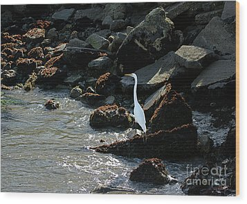 Wood Print featuring the photograph Great Egret On Sunny Seaside Rocks by Susan Wiedmann