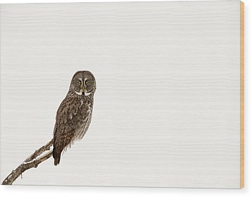 Great Gray On White Wood Print by Tim Grams