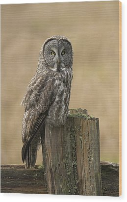 Great Gray Owl Wood Print by Doug Herr