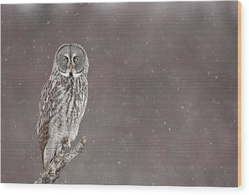 Great Gray Owl In Falling Snow Wood Print by Tim Grams