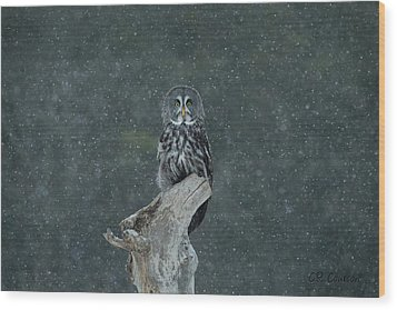 Great Gray Owl In Snowstorm Wood Print