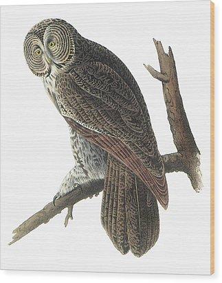 Great Gray Owl Wood Print by John James Audubon