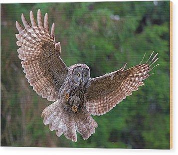 Great Gray Owl Swoop Wood Print