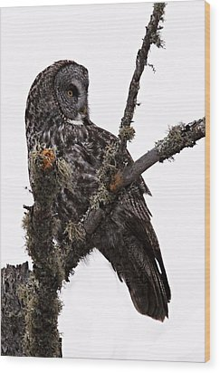 Great Grey Owl Wood Print by Larry Ricker