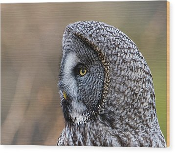 Great Grey's Profile A Closeup Wood Print by Torbjorn Swenelius