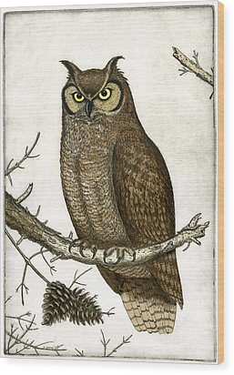 Great Horned Owl Wood Print by Charles Harden