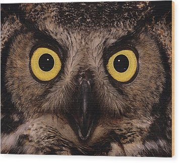 Great Horned Owl Face Wood Print by Tony Beck