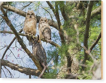 Great Horned Owl Family Wood Print