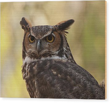 Great Horned Owl In A Tree 1 Wood Print by Chris Flees