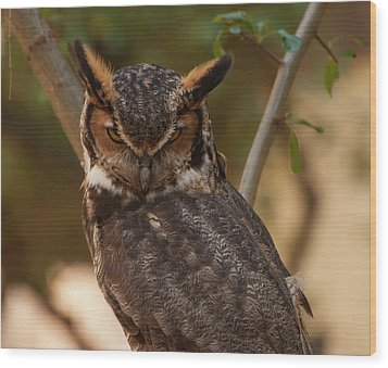 Wood Print featuring the photograph Great Horned Owl In A Tree 2 by Chris Flees