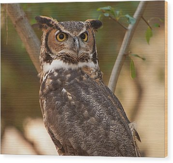 Wood Print featuring the photograph Great Horned Owl In A Tree 3 by Chris Flees