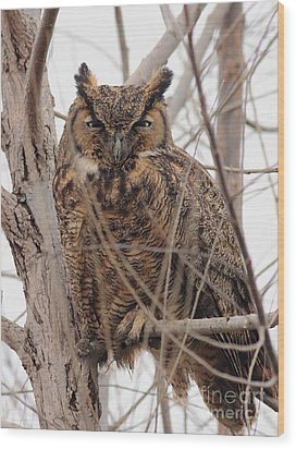 Great Horned Owl Perched Wood Print by Wingsdomain Art and Photography
