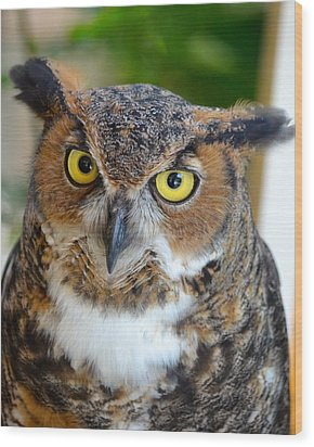 Great Horned Owl  Wood Print by Richard Bryce and Family