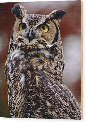 Great Horned Owl Wood Print by Sonja Anderson