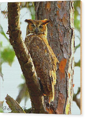 Wood Print featuring the photograph Great Horned Owl Wink by Barbara Bowen