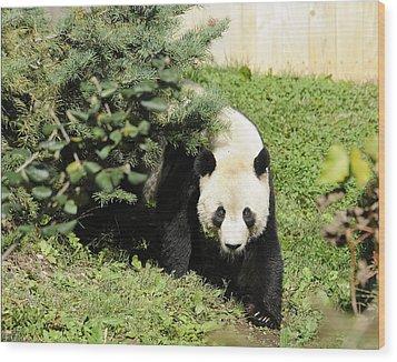 Great Panda Iv Wood Print by Keith Lovejoy