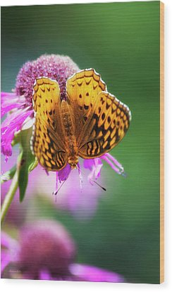 Great Spangled Fritillary Butterfly Wood Print by Christina Rollo