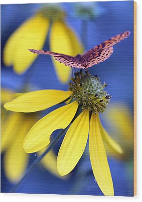 Great Spangled Fritillary On Yellow Coneflower Wood Print