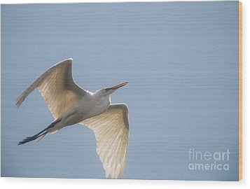 Wood Print featuring the photograph Great White Egret - 2 by David Bearden