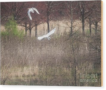 Wood Print featuring the photograph Great White Egret - 3 by David Bearden