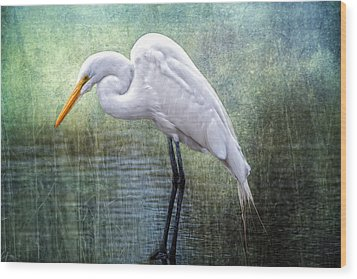 Great White Egret Wood Print by Bonnie Barry