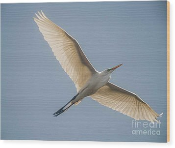 Wood Print featuring the photograph Great White Egret by David Bearden