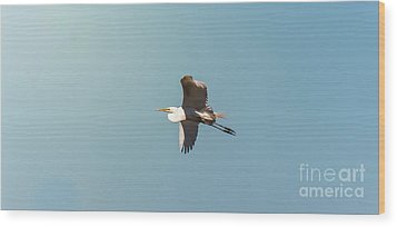 Great White Egret In Flight Wood Print by Robert Frederick