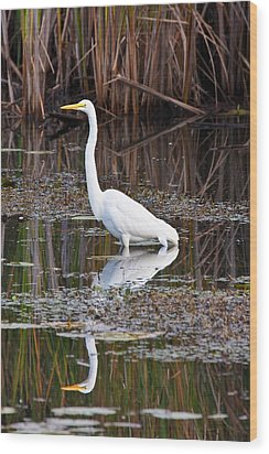 Great White Egret Wood Print by James Marvin Phelps