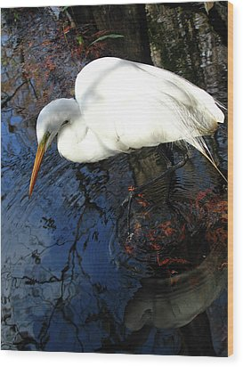 Great White Egret Wood Print by Juergen Roth