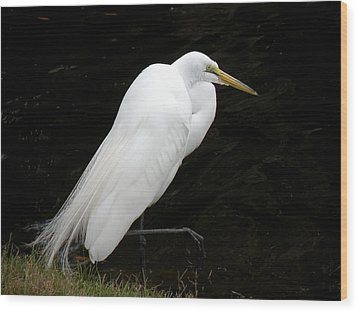 Great White Egret Wood Print by Rosalie Scanlon