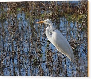 Great White Egret Wood Print by Wingsdomain Art and Photography